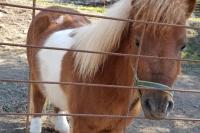 El cavall nan Pipa