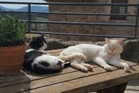 Els gats Xinxeta i Sucre