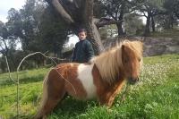 El cavall nan Pipa pasturant